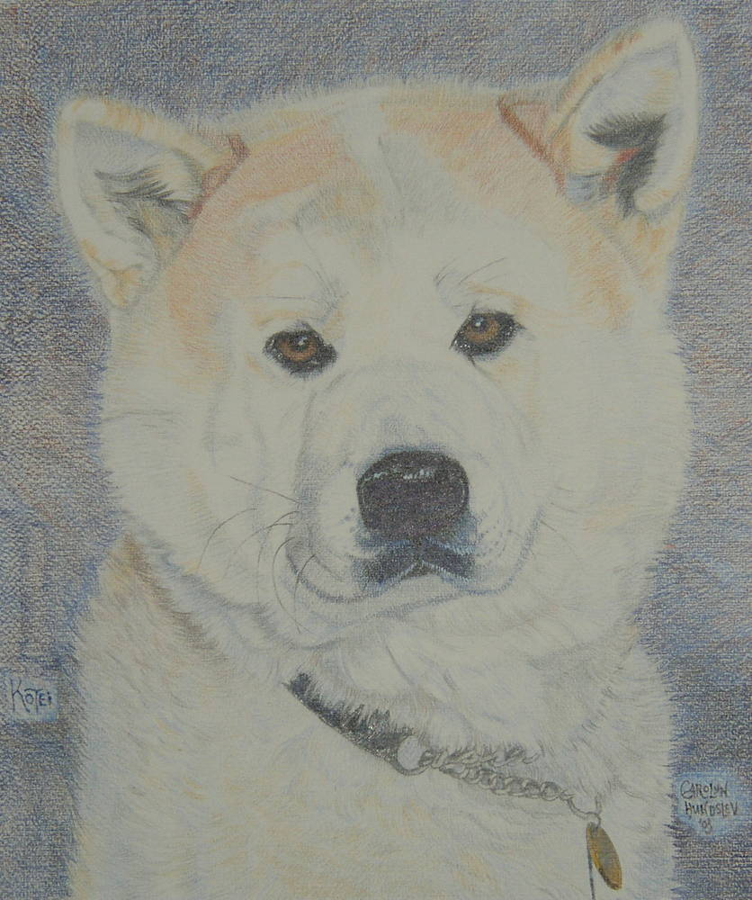 Artists rendition of an Akita.