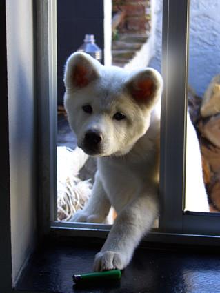 Luna: - May I get inside ??