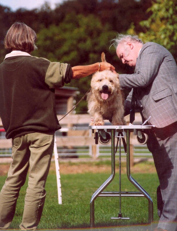 Glen of Imaal Terrier happy to be showing