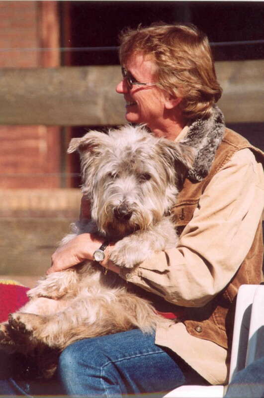 Glen of Imaal Terrier in a lap