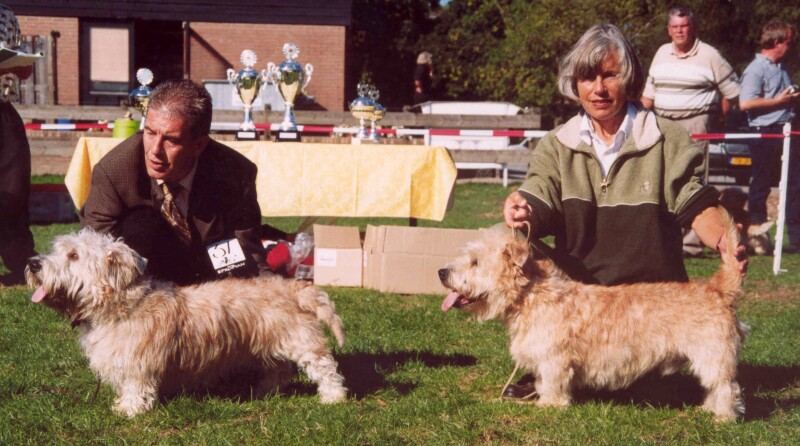 Glen of Imaal Terrier's in a line