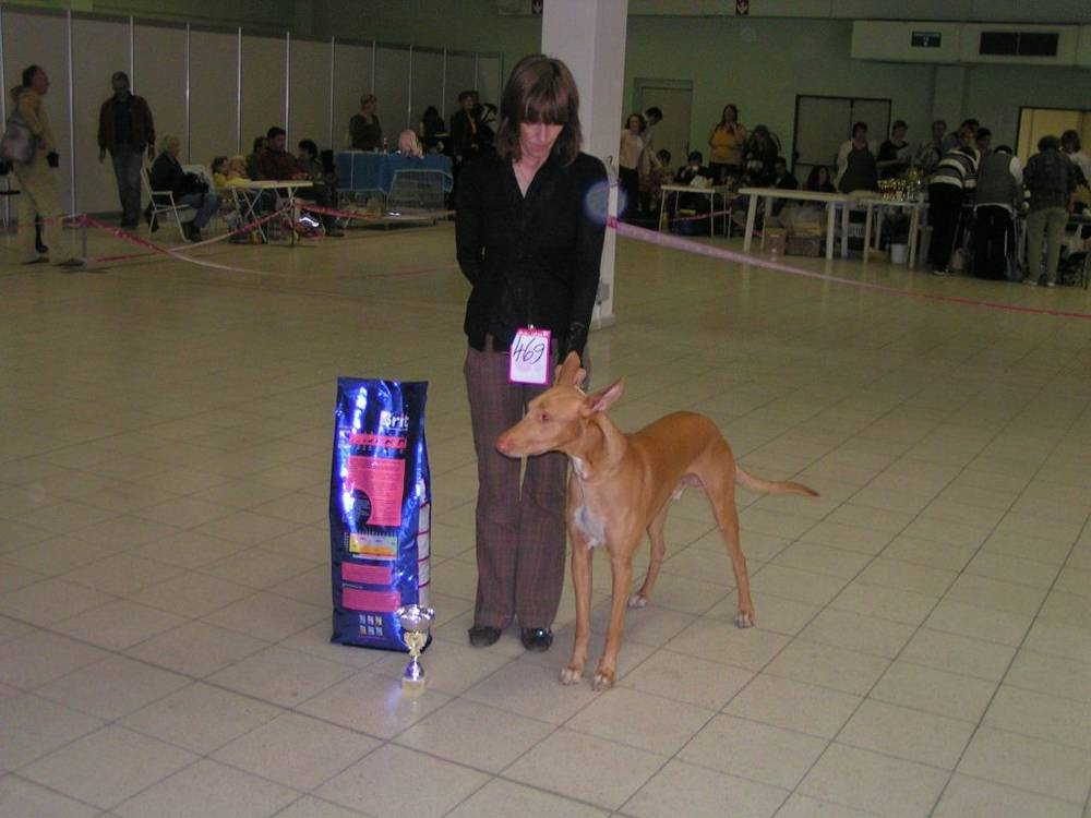 Pharaoh Hound next to dog food