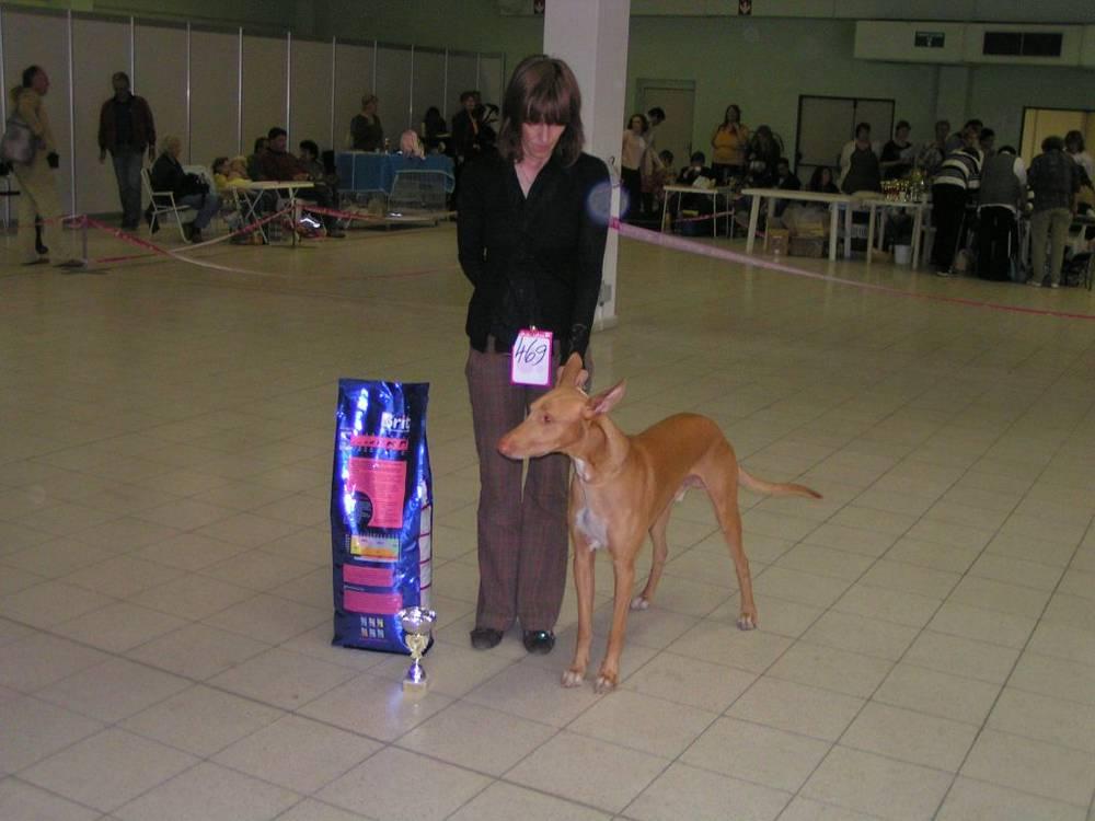 Pharaoh Hound next to dog food
