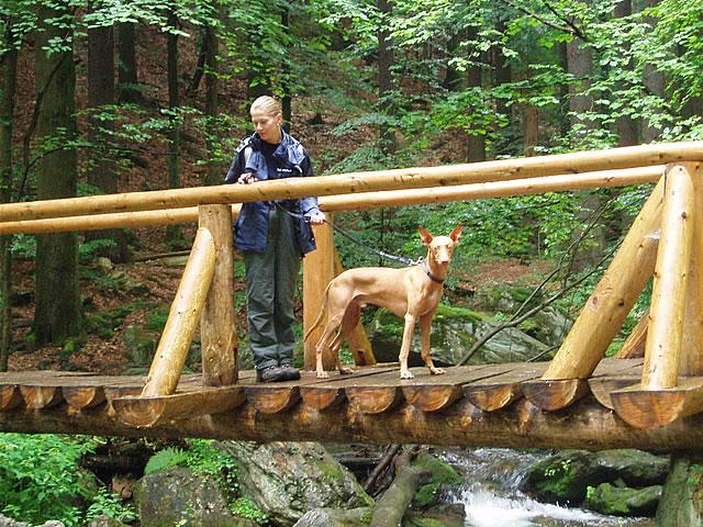 Pharaoh Hound on a bridge