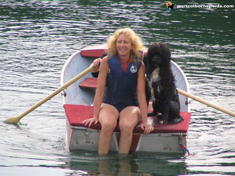 Portuguese Water Dog in row boat