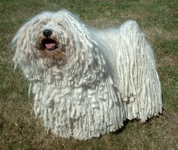 Dog Breeds With A Sense Of Humor