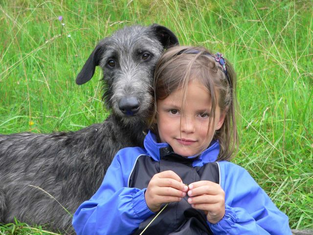 Scottish Deerhound with kid