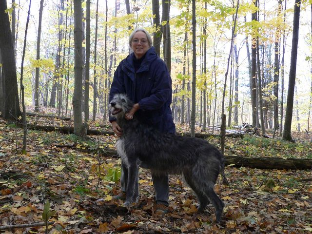 Scottish Deerhound with owner