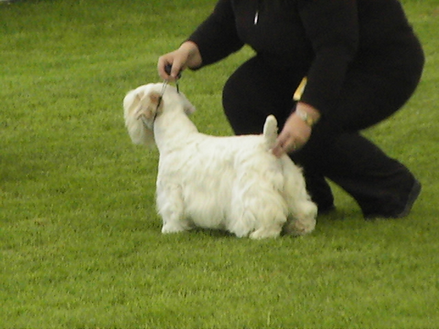 Sealyham Terrier uncomfortably held?