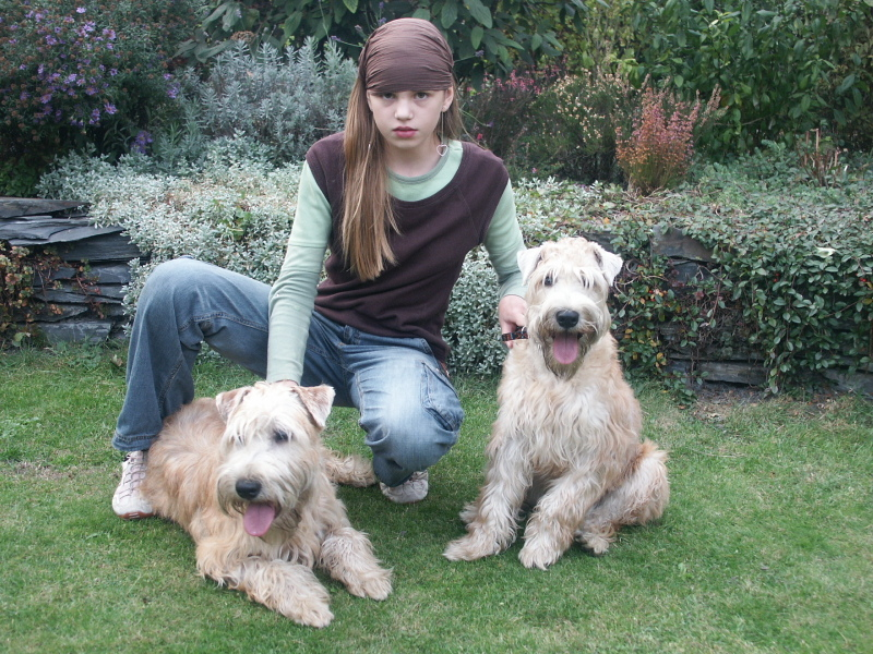 Soft Coated Wheaten Terrier's posing with owner