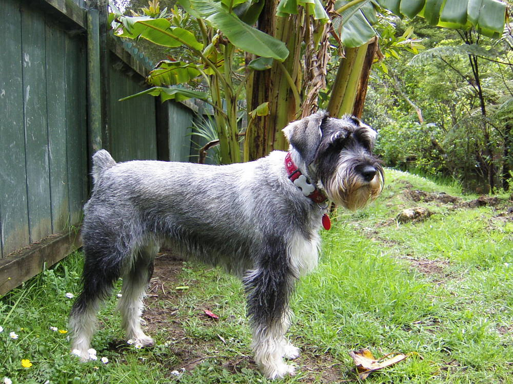 Image Result For Companion Dog Coloring