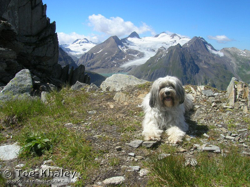 Tibetan Terrier in front of mountains