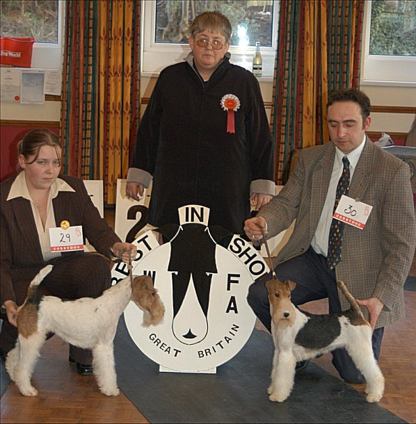 Wire Fox Terrier's best in show