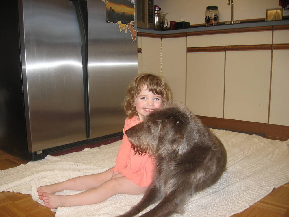 Wirehaired Pointing Griffon with child