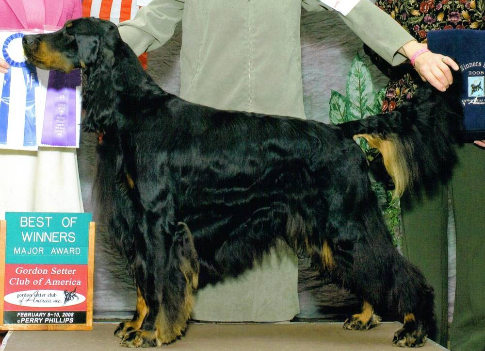 2007 GSCA Best Bred By Exhibitor - Ch Hillock American S