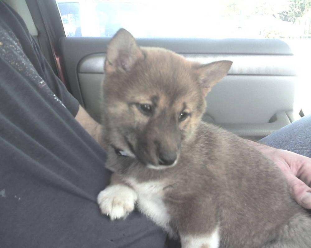 Bringing home baby :)