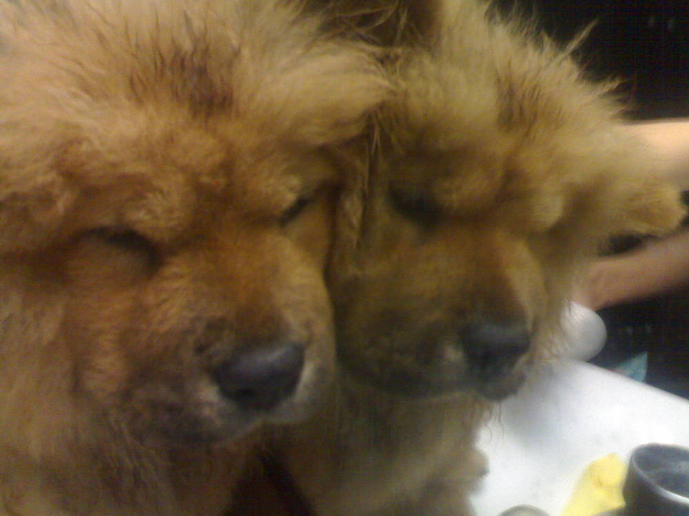 waow, there are 2 chows!