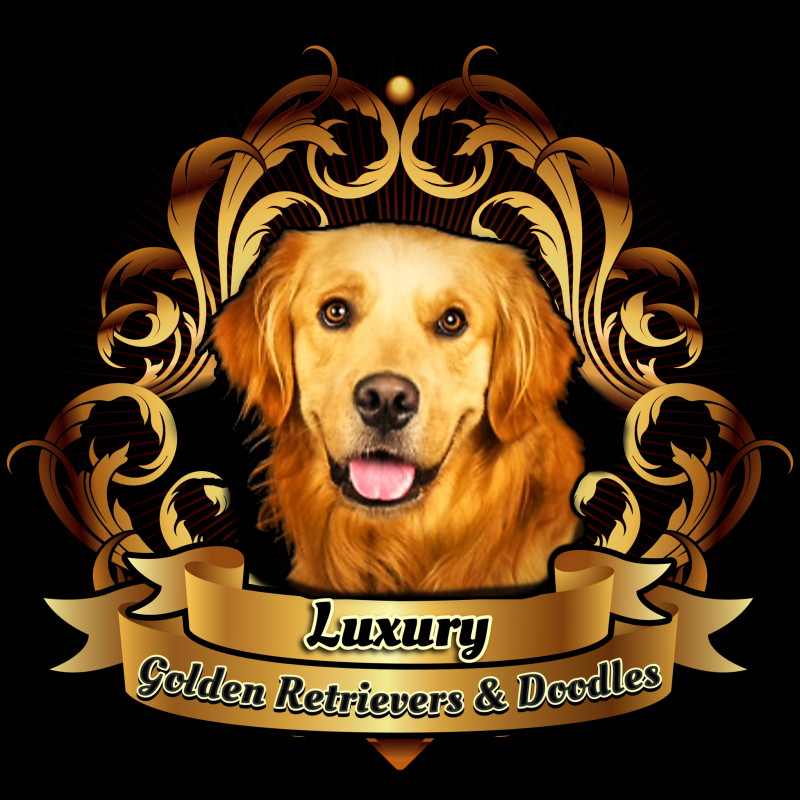 Luxury Golden Retrievers & Doodles