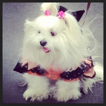 our dog buffy as a witch