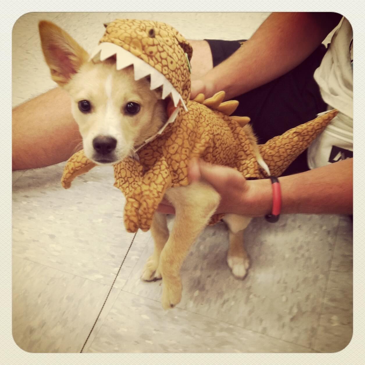 Jack the Dinosaur