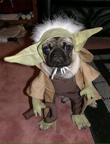 Oscar as Yoda