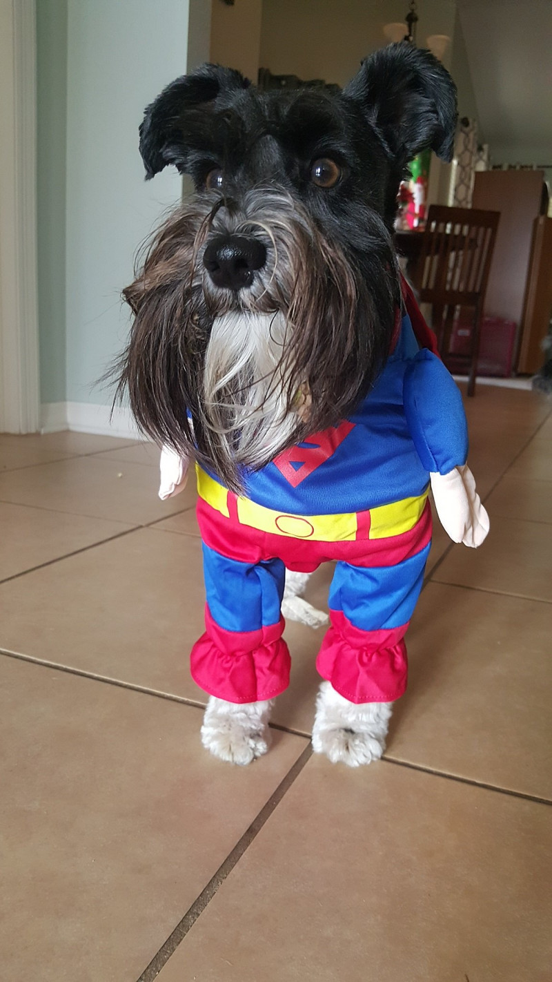 Parker Pancake as Superman