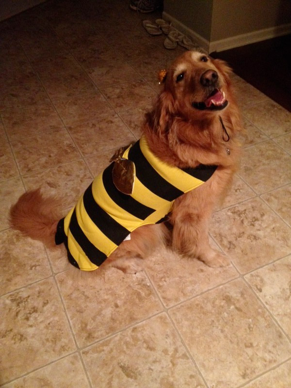 Trixie the bumblebee