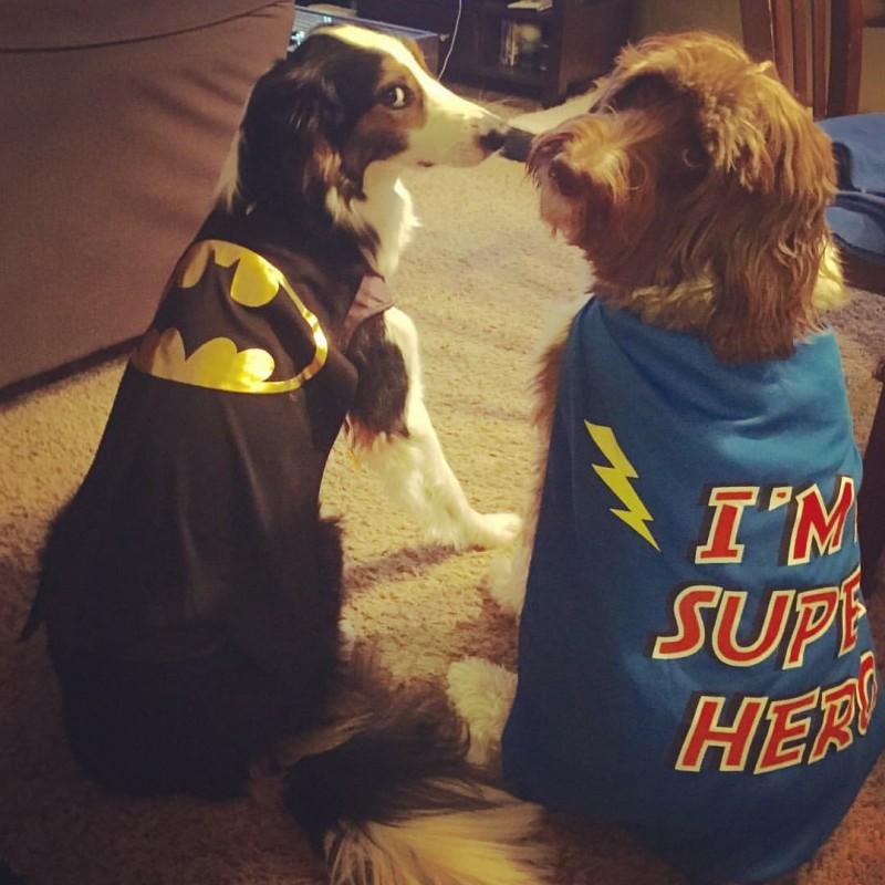 Super dogs!