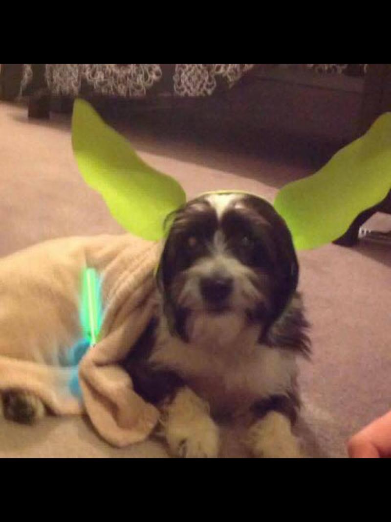 Oreo the Yoda!