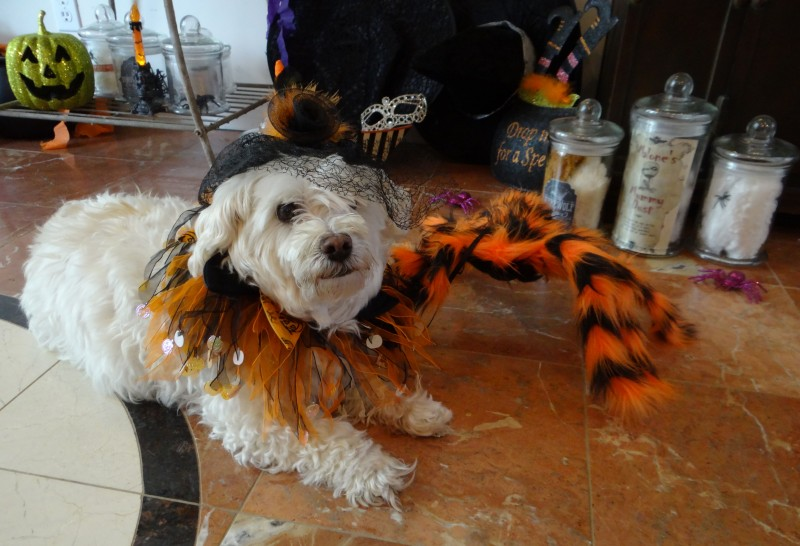 Leela loves to do Tricks for Treats on Howl-o-ween!