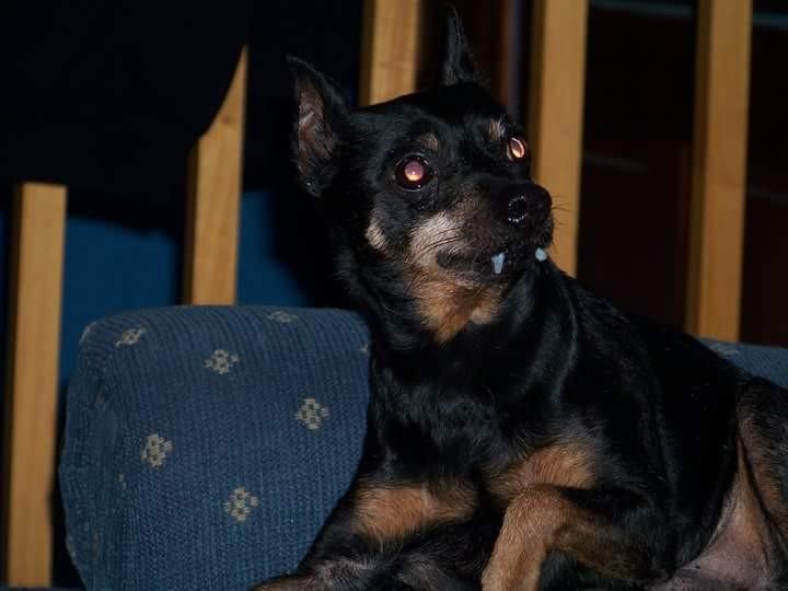 Vampire Riley