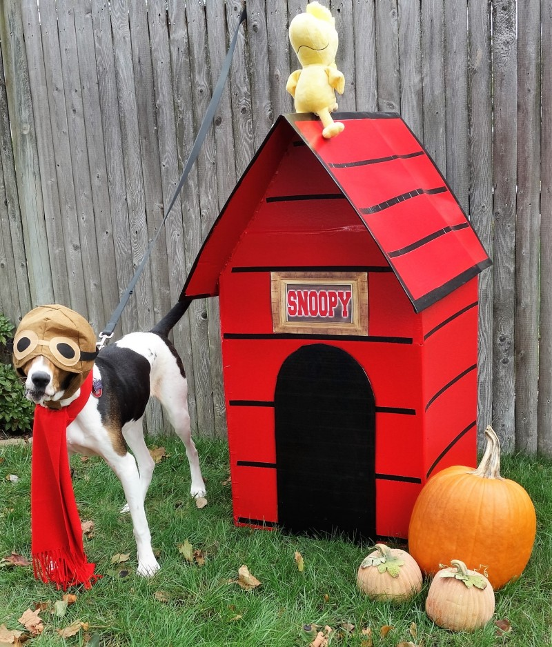 Rescue Pup Doc, a Blind Tree Walking Coonhound, as Snoopy!