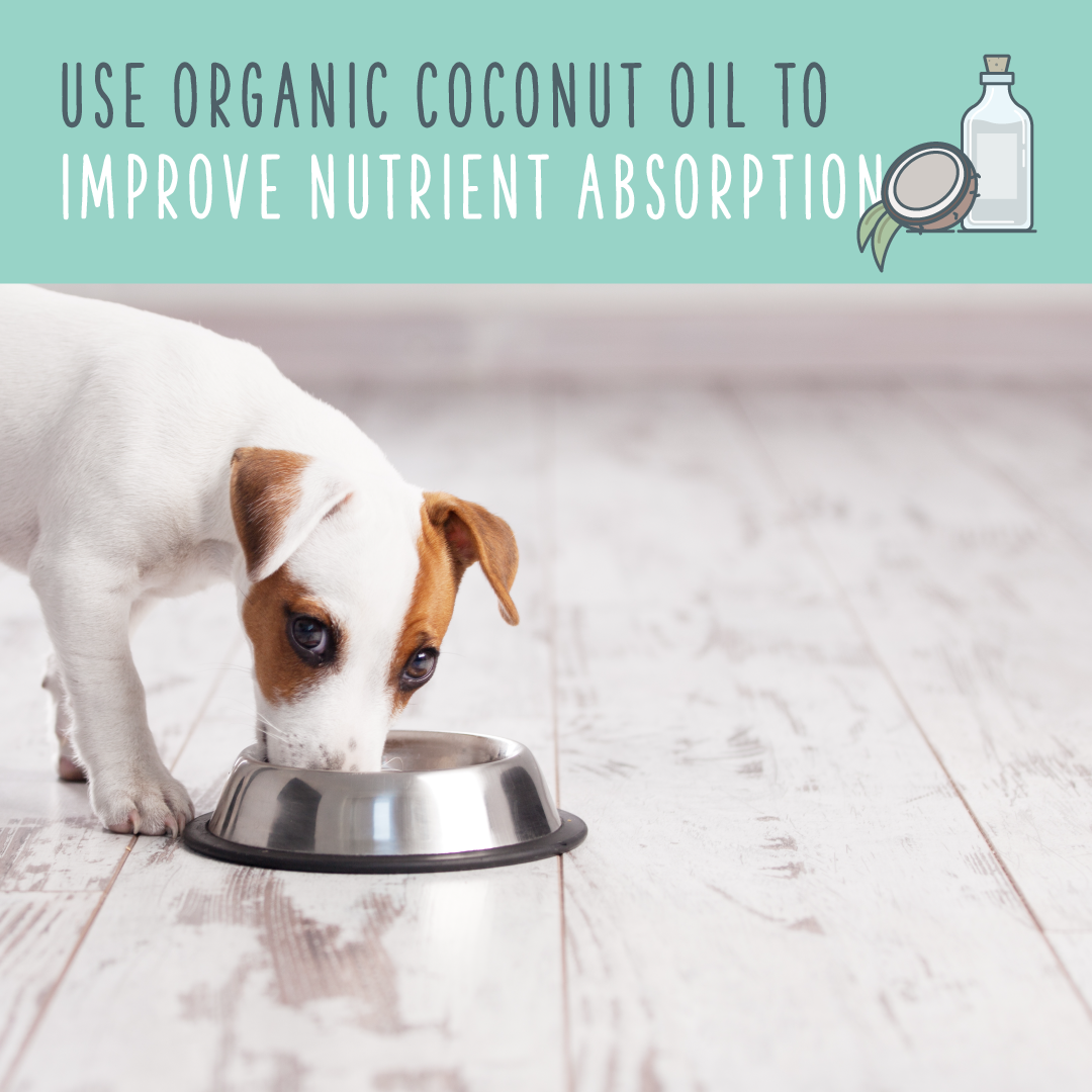 coconut oil for dogs nutrient absorption