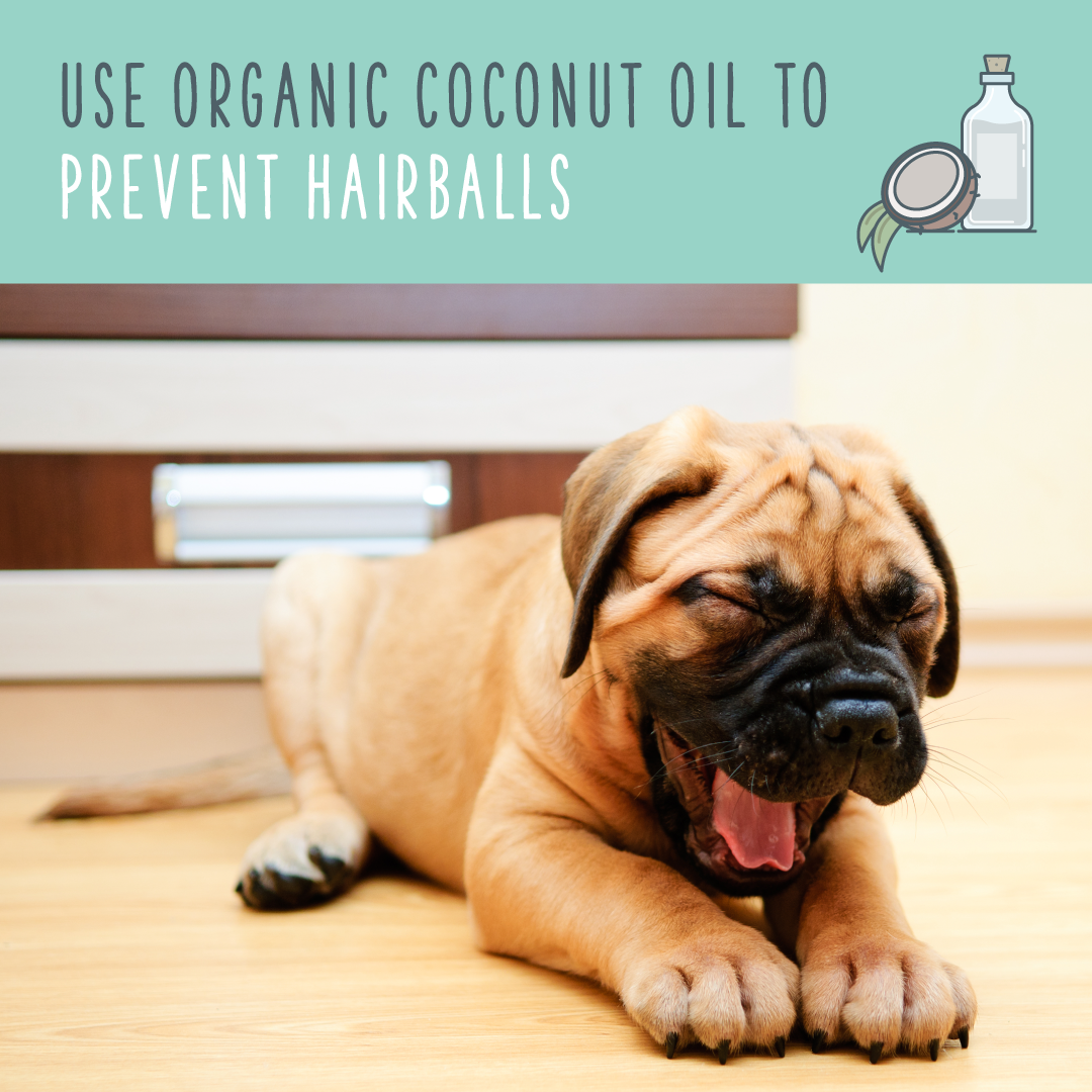coconut oil for dogs hairballs