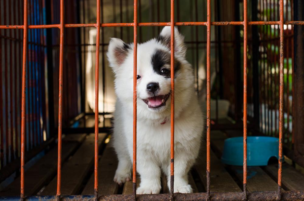 Puppy in dog cage