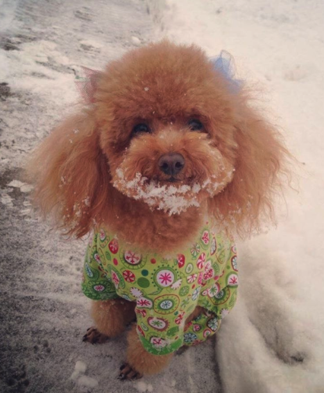 dog sweater in snow