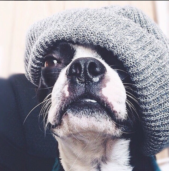 dog knitted hat
