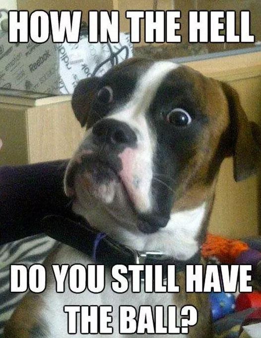 funny dog meme