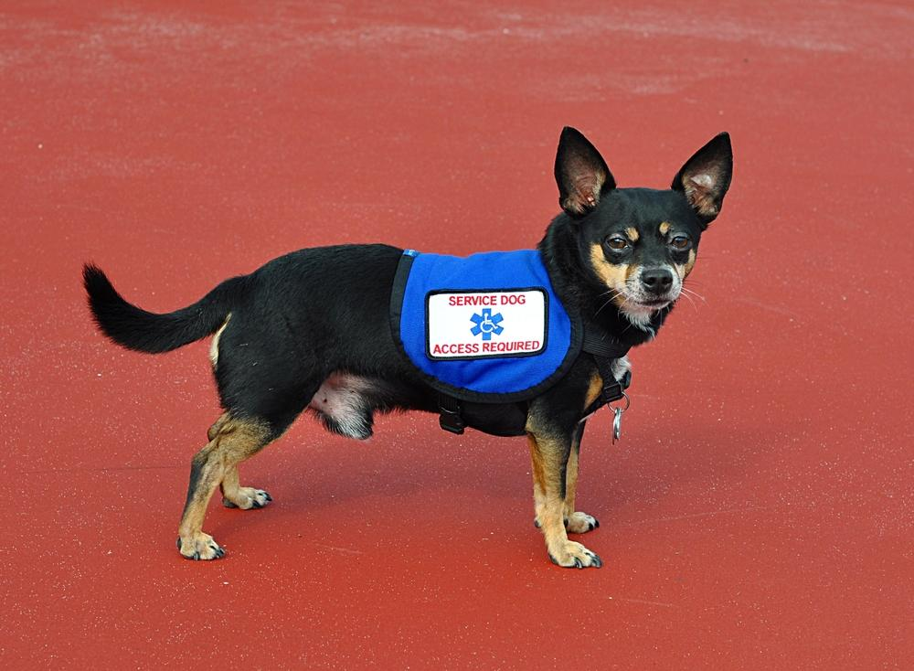 How To Get A Diabetic Service Dog