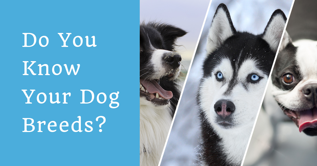 Dog Breed Recognition Test