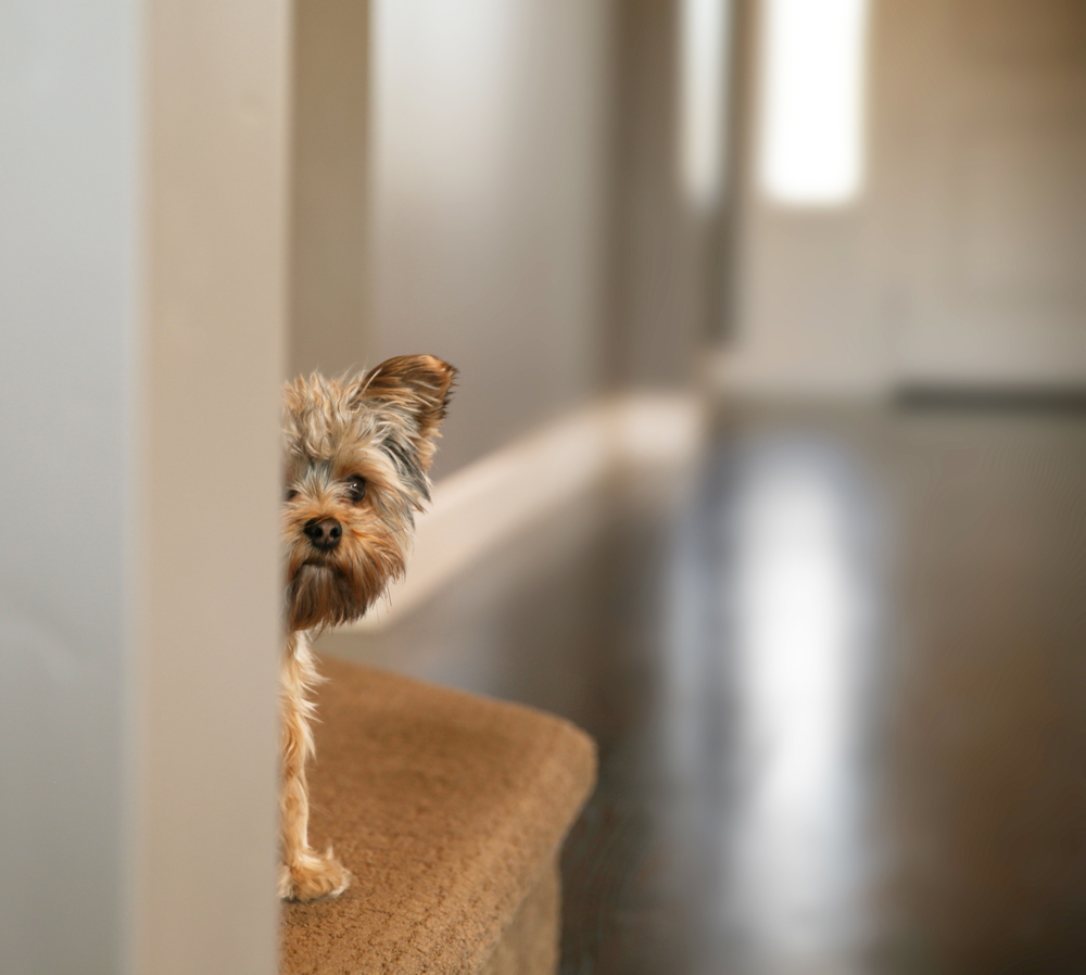 Pet Friendly Apartments How To Find Your New Home