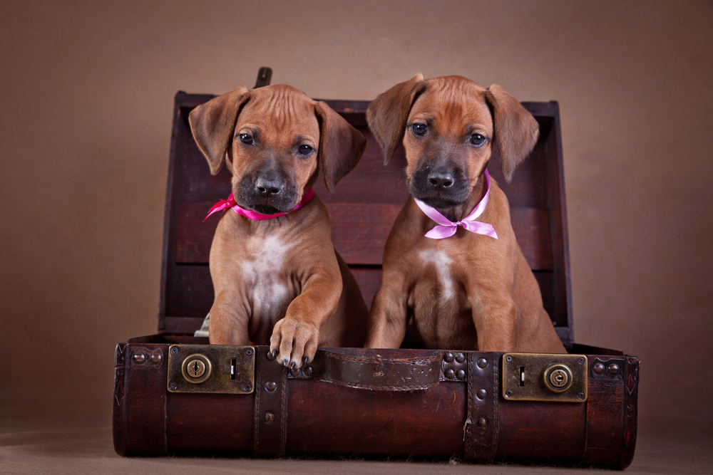 dog friendly hotel chains to visit this summer. Black Bedroom Furniture Sets. Home Design Ideas