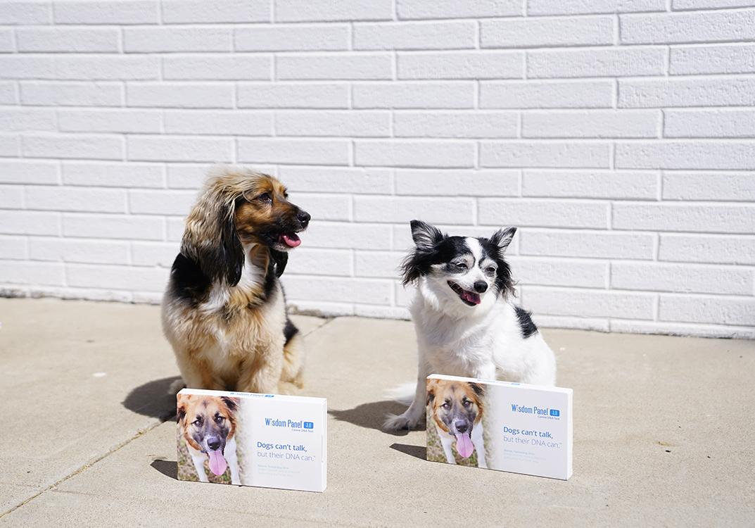 small dogs with dog DNA test