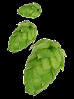 Renévergote's Brewery Logo