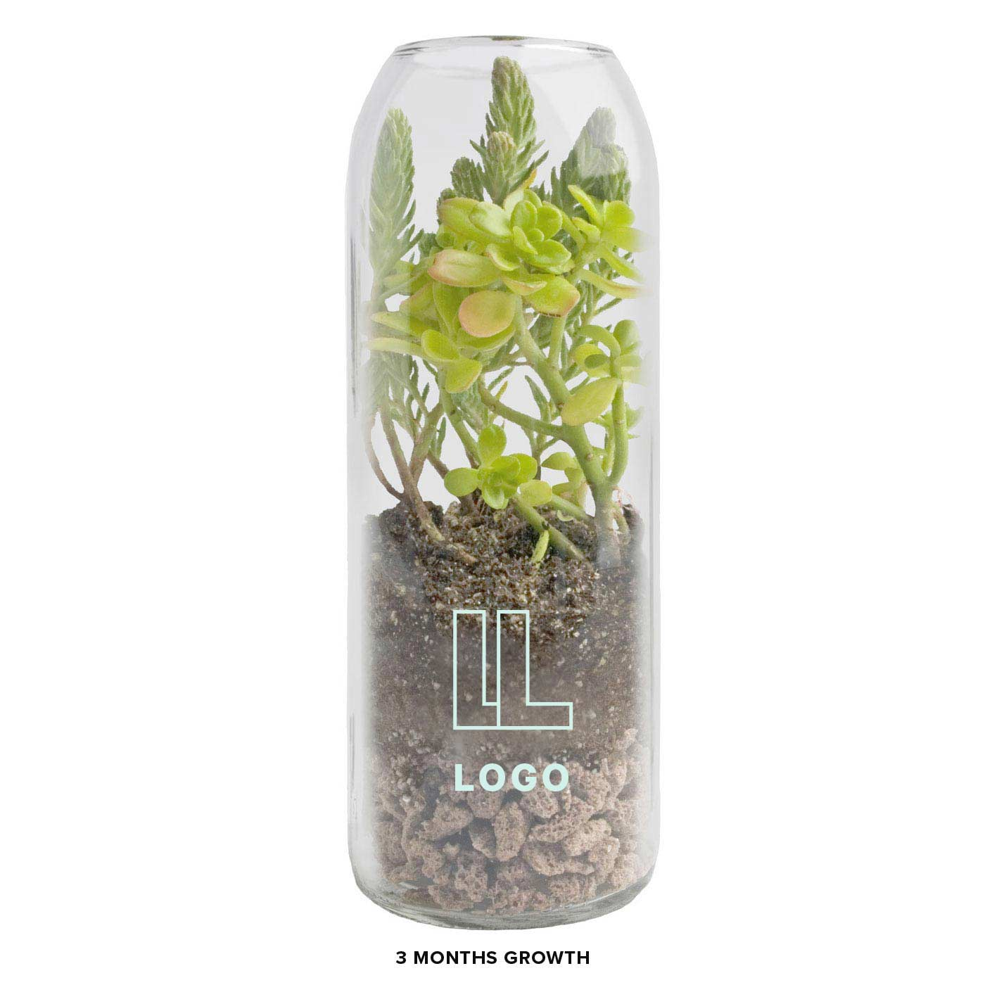 137969 bottle terrarium sedum one color one location imprint full color label