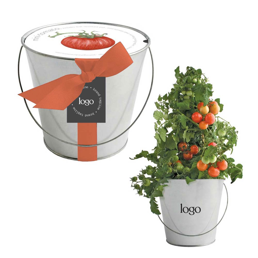 302818 tomato in a pail two color logo on pail custom hang tag choice of ribbon color