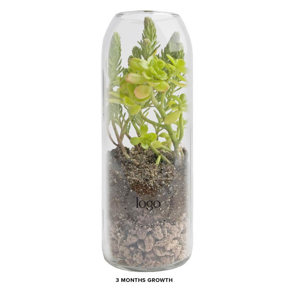 303140 bottle terrarium sedum one color one location imprint full color label