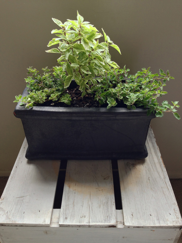 Secrets To A Thriving Indoor Herb Garden Build Realty