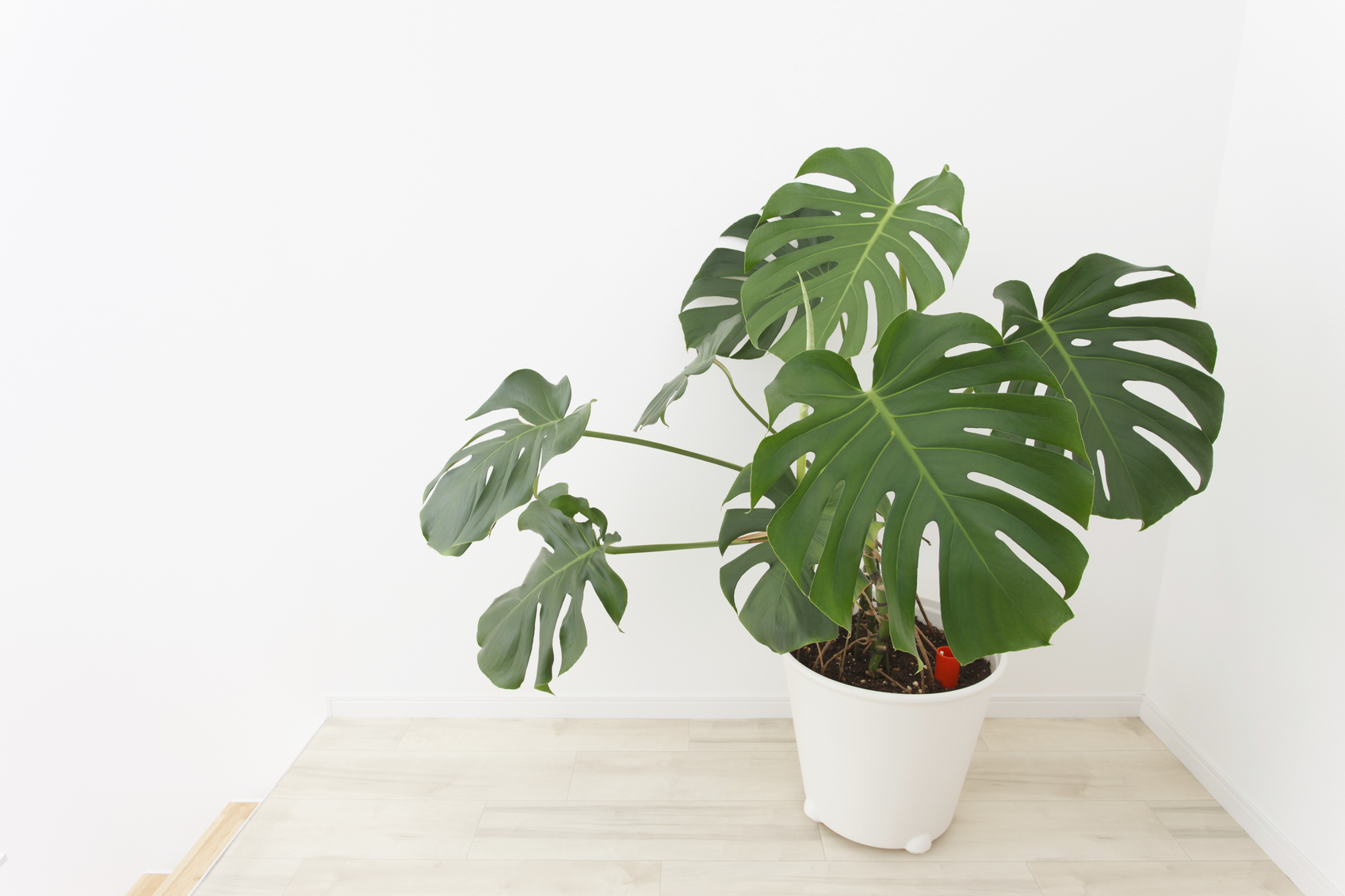 How to Care for Indoor Plants in the Fall | Build Realty