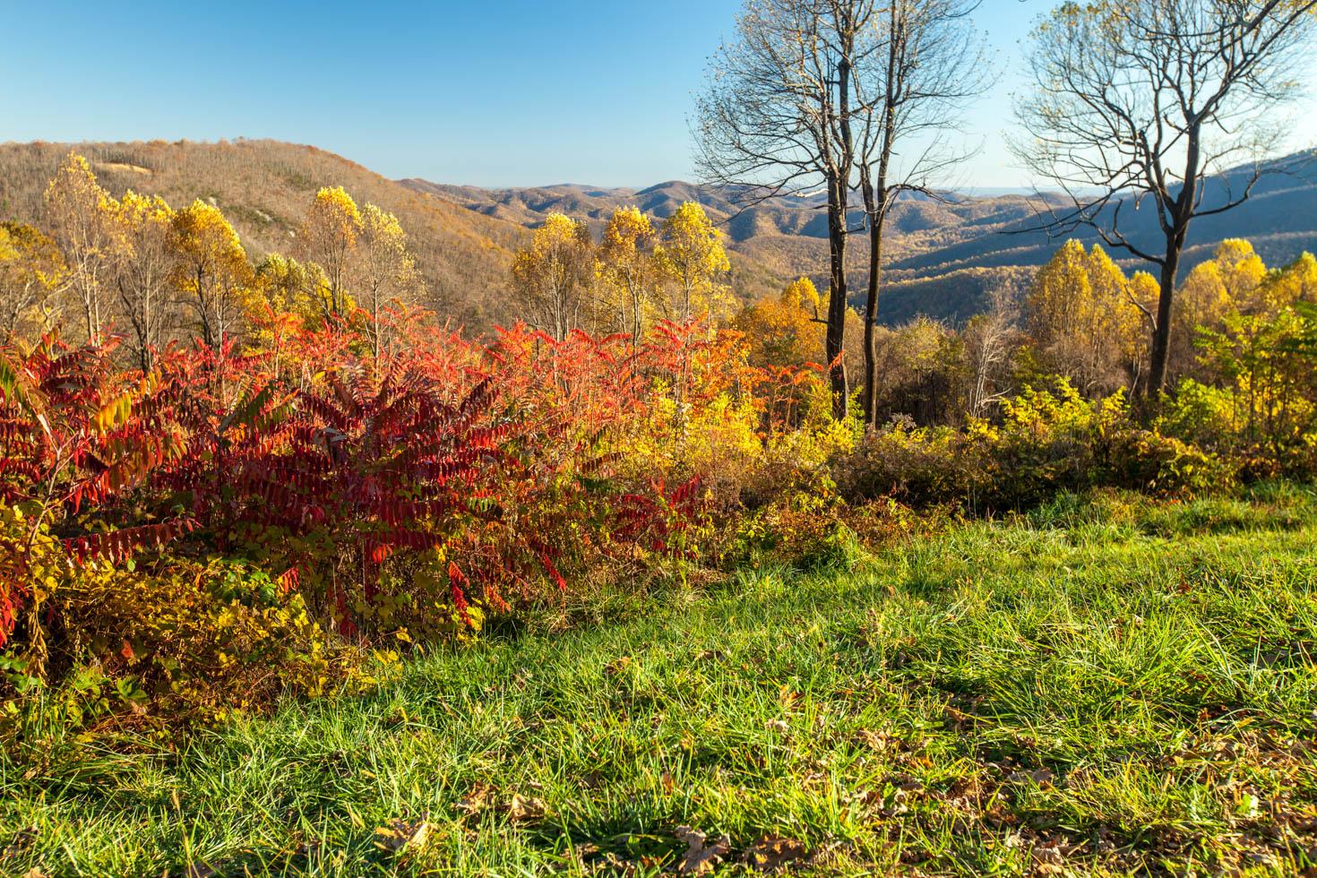 Skyline Drive, Shenandoah National Park, Blue Ridge Mountains, Virginia #vezzaniphotography